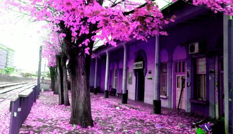 Kushtrim Thaqi - Leaves